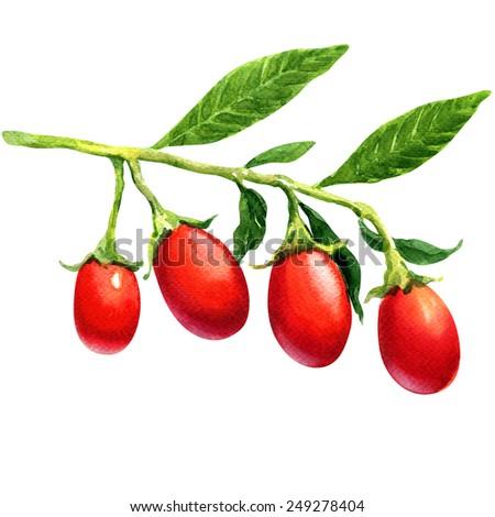 Watercolor goji berries isolated - stock photo