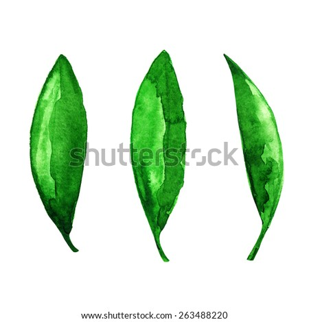 Watercolor green tea leaves set closeup isolated on white background. Hand painting on paper