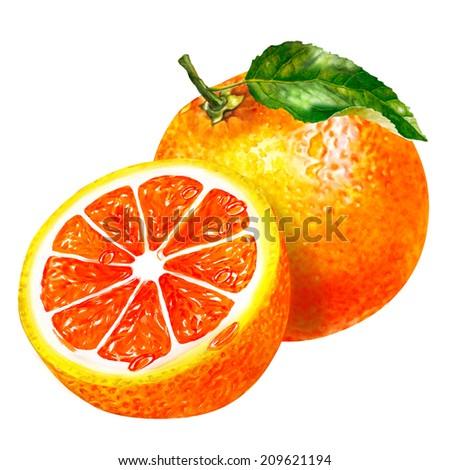 watercolor group of grapefruit - stock photo