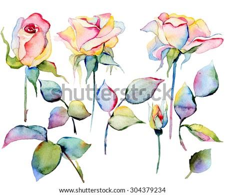 watercolor hand drawn roses - stock photo
