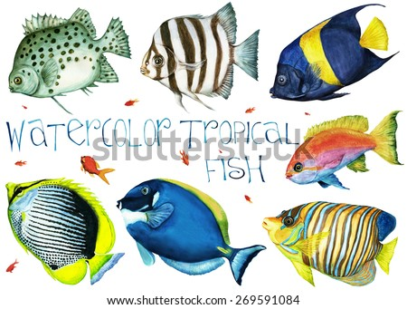 Watercolor hand drawn tropical fish on a white background - stock photo