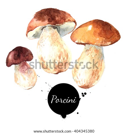 Watercolor hand drawn wild forest mushrooms porcini. Isolated eco natural food vegetables illustration on white background - stock photo