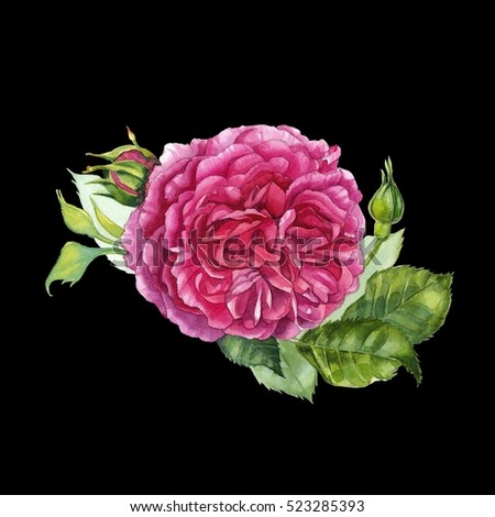 Watercolor hand painted rose. Can be used as romantic background for web pages, wedding invitations, greeting cards, textile design, patterns, package design and so on.