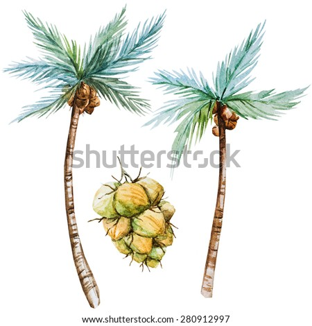 watercolor illustration, coconut palms, a bunch of coconuts