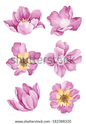 watercolor illustration flower set in simple background  - stock photo