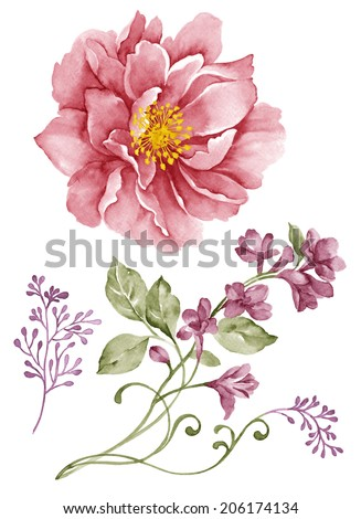 watercolor illustration flower set in simple white background - stock photo