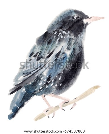 Watercolor illustration of a bird Starling