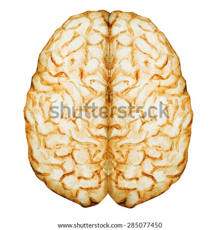 watercolor illustration of a brain, the two hemispheres, - stock photo