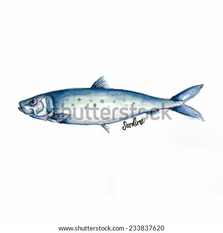 Watercolor Illustration of a Sardine. Hand-drawn Fish on White Background.