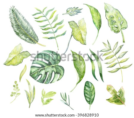 Watercolor illustration of a set of tropical plants, palm branch,