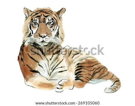 Watercolor illustration of a tiger