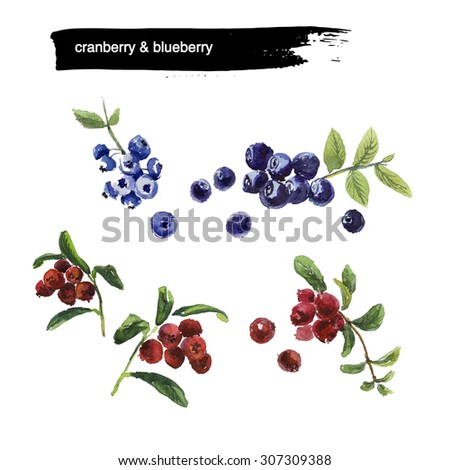 Watercolor illustration of fresh bright colored hand drawn berries on white background. Good for recipe book illustration, magazine or journal article.  - stock photo