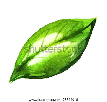 Watercolor illustration of green leaf - stock photo