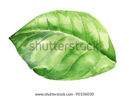 Watercolor illustration of green leaf isolated on white