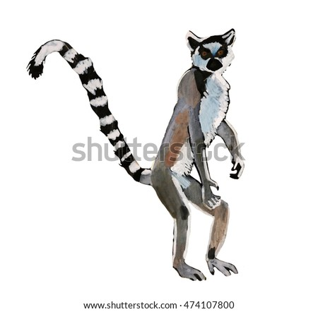 Watercolor illustration of lemur on white background.