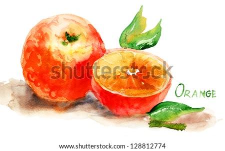 Watercolor illustration of Orange - stock photo
