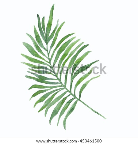 Watercolor illustration of tropical leaves. With a high resolution for print.