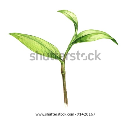 Watercolor illustration of young plant - stock photo