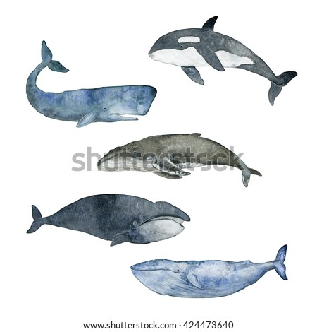 Useful message Sperm whale illustrations thanks for