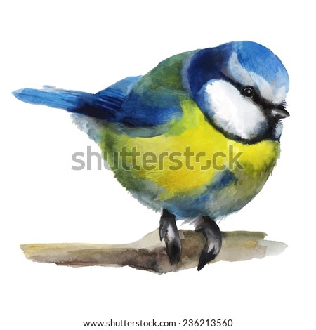 Watercolor illustration with a titmouse on a branch. Hand drawn illustration - stock photo