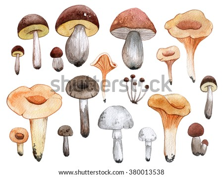 Watercolor illustration with mushrooms. Hand drawn
