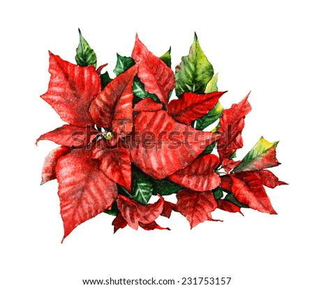 watercolor illustration with poinsettia