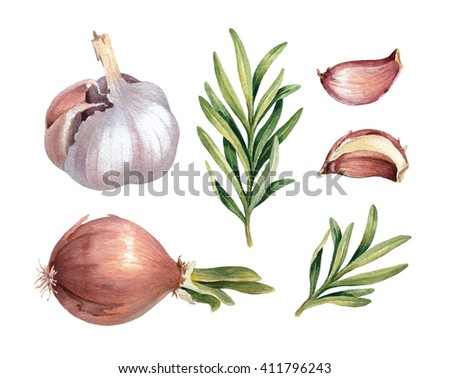 Watercolor illustrations of onion, garlic and rosemary