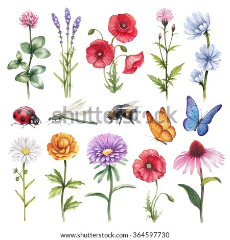 Watercolor illustrations of wild flowers and insect illustrations - stock photo