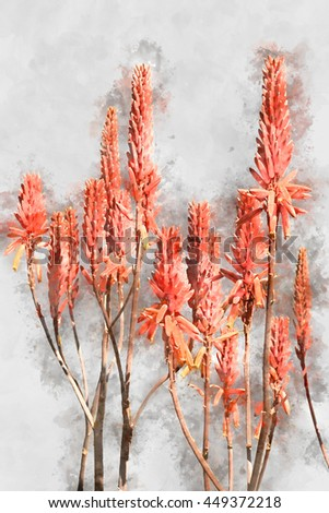 Watercolor image of orange Agave plant flower. - stock photo