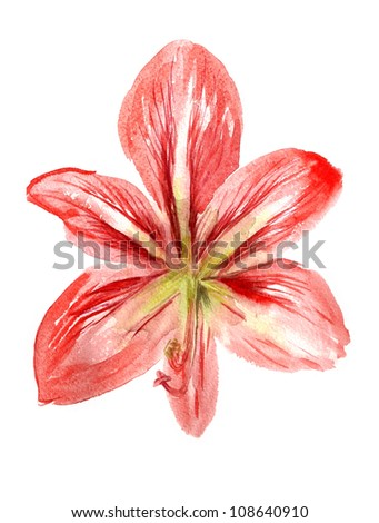 Watercolor image of red flower isolated on white background - stock photo