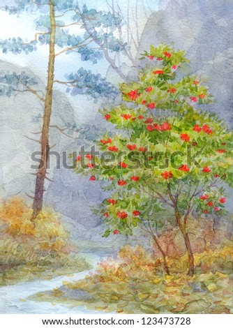 Watercolor landscape. Forest mountain brook runs between pine and ash - stock photo