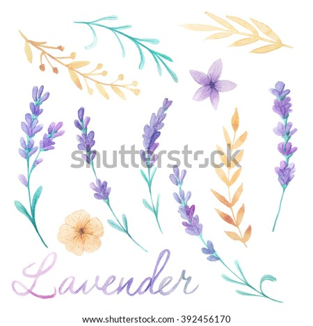 Watercolor Lavender Flowers Hand Painted Provence Herbs Isolated On White Background Floral Clip Art