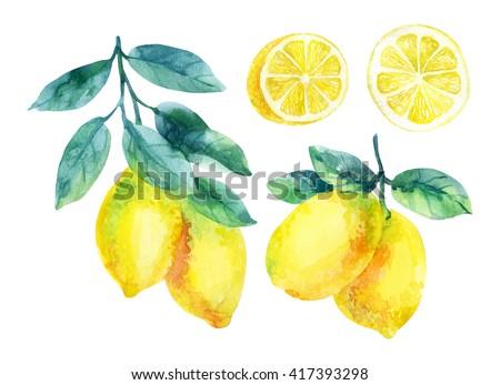 Watercolor lemon fruit branch with leaves isolated on white background. Lemon citrus tree. Lemon branch and slices. Lemon branch with leaves. Hand painted illustration - stock photo
