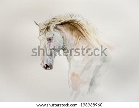watercolor lusitano horse portrait - stock photo