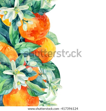 Watercolor mandarine orange fruit card with leaves and blossom  on white background. Orange citrus tree. Mandarin bloom. Tangerine with leaves, branch, flower. Hand painted illustration - stock photo