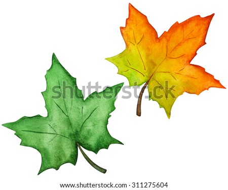 Watercolor maple leaves closeup isolated on white background set. Hand painting on paper - stock photo