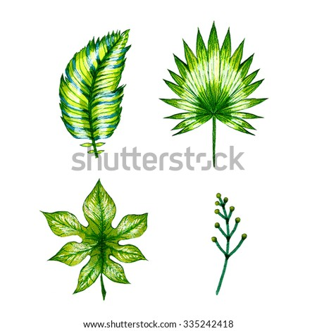 Watercolor multicolor set illustration tropical leaves isolated on white background