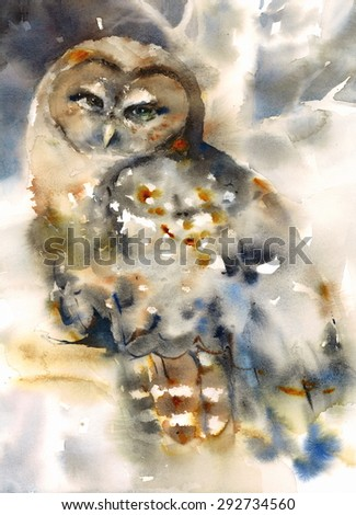 Watercolor Northern Spotted Owl Sitting on the Branch Hand Painted Wild Bird Illustration - stock photo