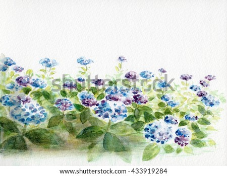 Watercolor of Hydrangeas on a watercolor paper. Flower painting.