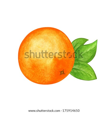 Watercolor orange and leafs isolated - illustration - stock photo