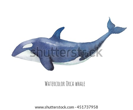 Watercolor orca. Hand drawn killer whale isolated on white background. Sea animal illustration