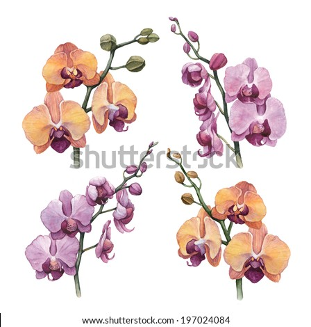 Watercolor orchid flowers  - stock photo