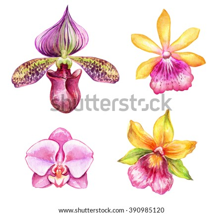 watercolor orchids, tropical flowers, botanical clip art, illustration of assorted flowers isolated on white background - stock photo