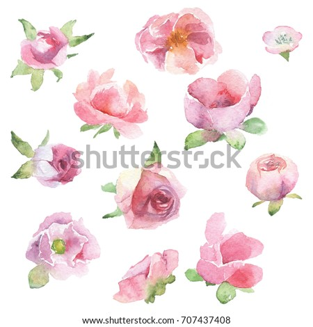 beautiful pink flowers set hand painted watercolor flowers leaves stock illustration