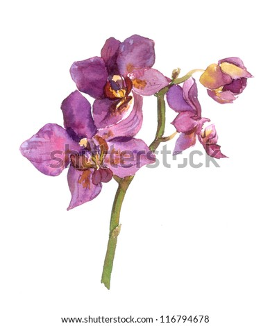 Watercolor painted orchid - stock photo