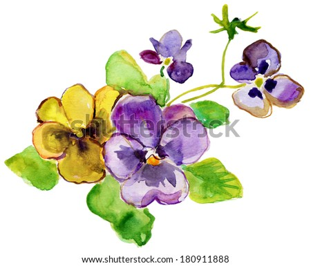 Watercolor painting. Bright purple and yellow  flowers and lush green leaves bush forest violet isolated on white background - stock photo