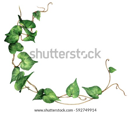 watercolor painting green leave ivy isolated on white background watercolor hand painted green