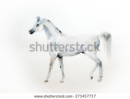 Watercolor painting of a white arabian horse standing over a white background