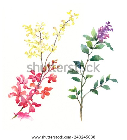 watercolor painting of flowers on white background - stock photo