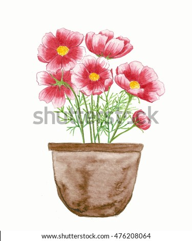 watercolor painting of leaves and flower, cosmos flowers in pot, on white background
